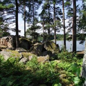 Auf der Suche nach dem alten Schweden_2