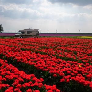 Unser Hobby und Tulpen aus Holland_2