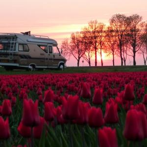 Unser Hobby und Tulpen aus Holland_3