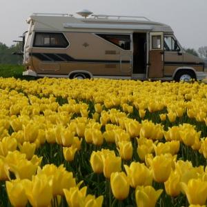 Unser Hobby und Tulpen aus Holland_1