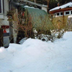 Winter 2010_1